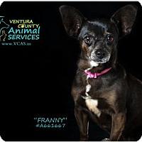 Adopt A Pet :: *FRANNY - Camarillo, CA