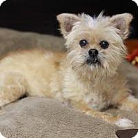 Adopt A Pet :: FARRAH - Kyle, TX