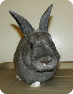 Dwarf Mix for adoption in North Gower, Ontario - Rory