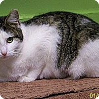 Adopt A Pet :: Jonnie - Dover, OH