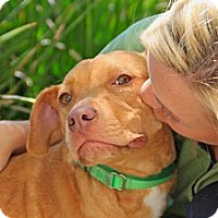 Adopt A Pet :: Catalina - Mission Viejo, CA