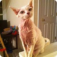 Adopt A Pet :: Sassy - Easley, SC