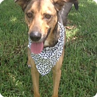 Adopt A Pet :: Pouncer aka Positano - Davie, FL