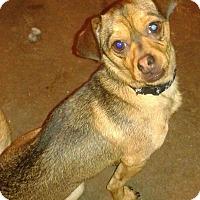 Adopt A Pet :: Marley - Arlington, TN