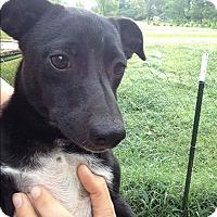 Adopt A Pet :: Eedi meet me 7/22 - Manchester, CT