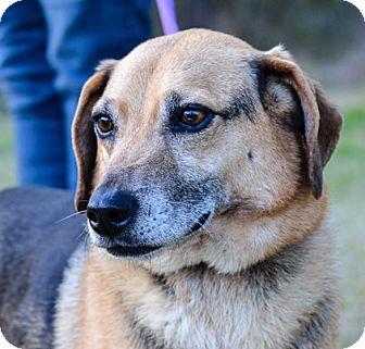 Corgi Mix Dog for adoption in Washington, Georgia - Peanut