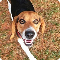 Adopt A Pet :: Hector - Freeport, ME