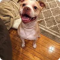 Adopt A Pet :: Karl - Baltimore, MD