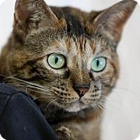 Adopt A Pet :: Mara - Plano, TX