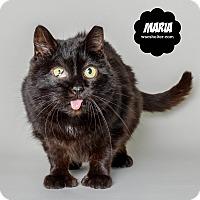 Adopt A Pet :: Maria - Wyandotte, MI