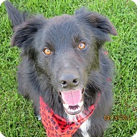 Adopt A Pet :: SHADOW - Nampa, ID