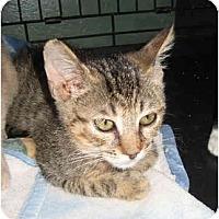 Adopt A Pet :: Zach - Davis, CA