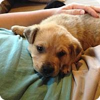 Adopt A Pet :: Twix - Hamburg, PA