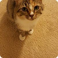 Adopt A Pet :: Mirabelle - McDonough, GA