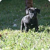 Adopt A Pet :: Chandon - Destrehan, LA