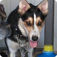 Adopt A Pet :: Remmy - Northumberland, ON