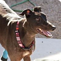 Adopt A Pet :: Gillian - Tucson, AZ