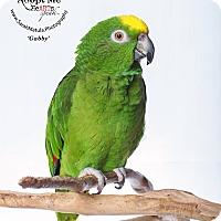 Adopt A Pet :: Gabby - Stratford, CT