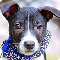 Adopt A Pet :: Richard - San Ramon, CA