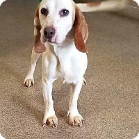 Adopt A Pet :: Josephine - Troy, OH