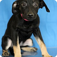 Adopt A Pet :: Illy - Waldorf, MD