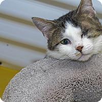 Adopt A Pet :: Jennifur - Pittsburg, KS