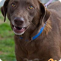 Adopt A Pet :: Kinko - Evansville, IN