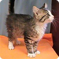 Adopt A Pet :: Moose - Maynardville, TN