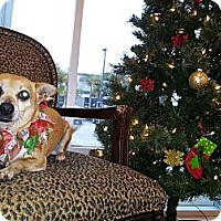 Adopt A Pet :: Herbie - Anaheim, CA