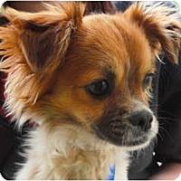 Adopt A Pet :: Eugene - Mission Viejo, CA