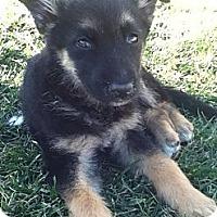 Adopt A Pet :: CINDY - Torrance, CA