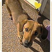 Adopt A Pet :: Rosemary - Hartsville, TN