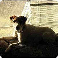 Adopt A Pet :: Tango in Conroe - Houston, TX