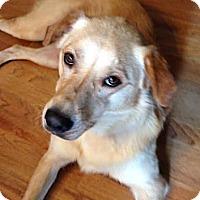 Adopt A Pet :: Sally - Cumming, GA