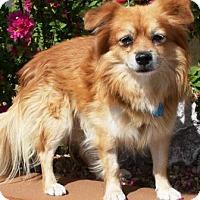 Adopt A Pet :: Doc - Gilbert, AZ