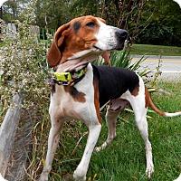 Adopt A Pet :: Tracker - Washington, PA