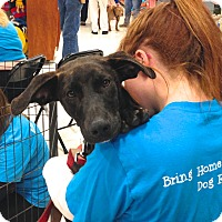 Adopt A Pet :: Katie - Ijamsville, MD