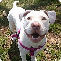 Adopt A Pet :: Juniper - Newtown, CT