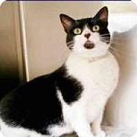 Adopt A Pet :: Venus - Kingwood, TX