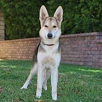 Adopt A Pet :: Tipper - San Diego, CA