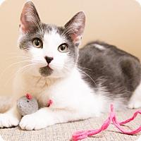 Adopt A Pet :: Nadine - Chicago, IL