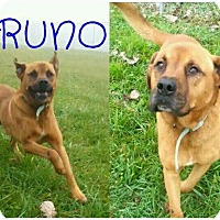 Adopt A Pet :: Bruno - Lagrange, IN