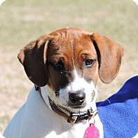 Adopt A Pet :: Ruth Ann - Berkeley Heights, NJ