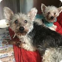 Adopt A Pet :: Jensen and Jordie - Oak Ridge, NJ
