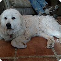 Adopt A Pet :: Chloe - in MASS - Lee, MA