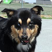Adopt A Pet :: Rodeo - Beebe, AR