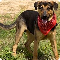 Adopt A Pet :: DUKE - Lexington, TN