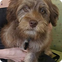 Adopt A Pet :: Claire Hazel - San Francisco, CA