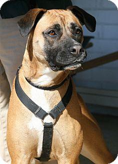 Boxer Mix Dog for adoption in Bedford, Virginia - Queenie