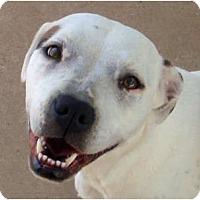 Adopt A Pet :: Kenia - Houston, TX